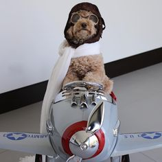 Pilot Dog Costume