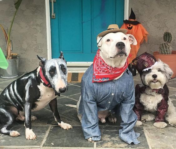 Dog Costume Party