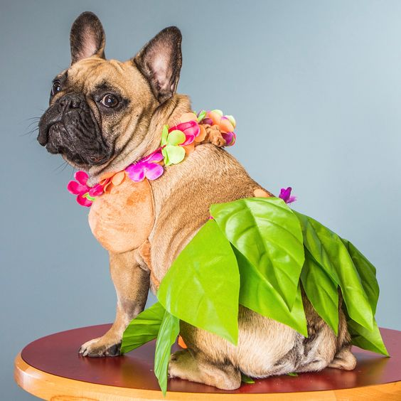 Hawaiian Dog Costume for Halloween