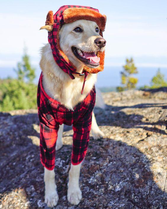 Lumberjack Dog Halloween Costume