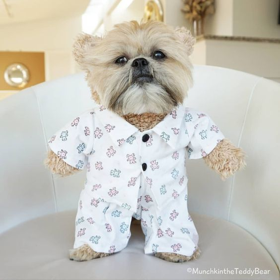 Dog Pajamas Halloween Costume