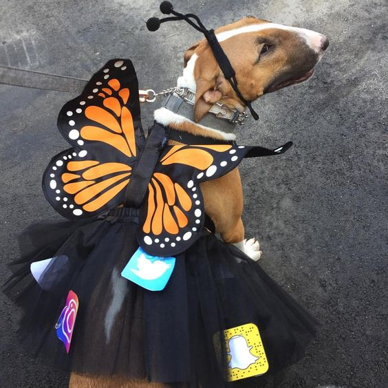 Social Butterfly Dog Halloween Costume