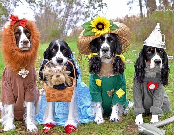 Wizard of Oz Dog Halloween Costumes Costume Party Costume Contest