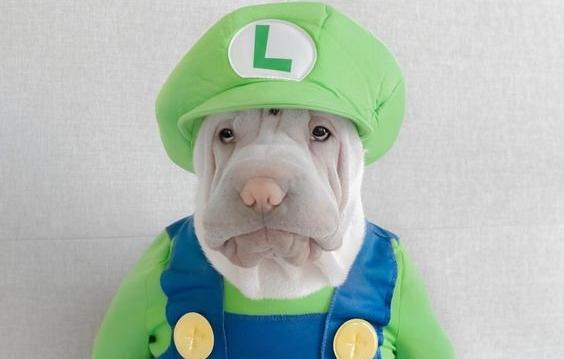 Luigi Dog Halloween Costume