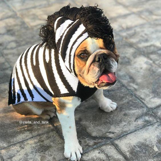 Zebra Dog Halloween Costume