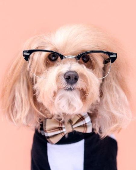 Custom Personalized Dog T-Shirt By Barkley & Wagz