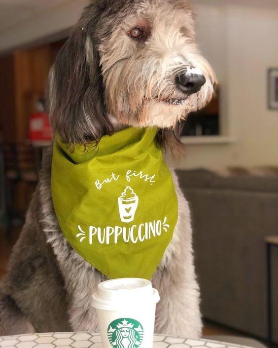 But First, Puppuccino Bandana By Barkley & Wagz