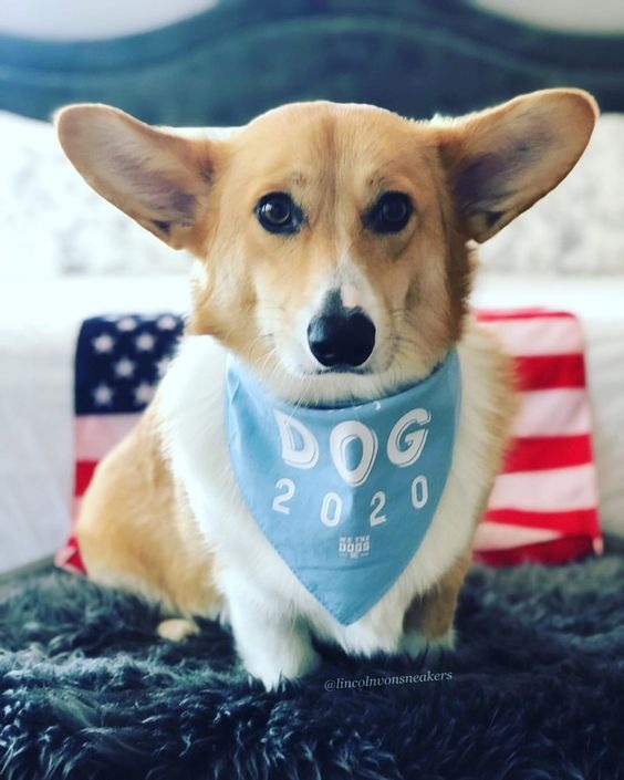 DOG 2020 Bandana By Barkley & Wagz For We The Dogs DC