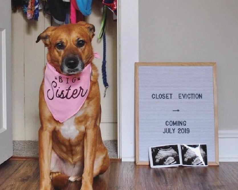 Big Sister Custom Personalized Pregnancy Announcement Bandana By Barkley & Wagz