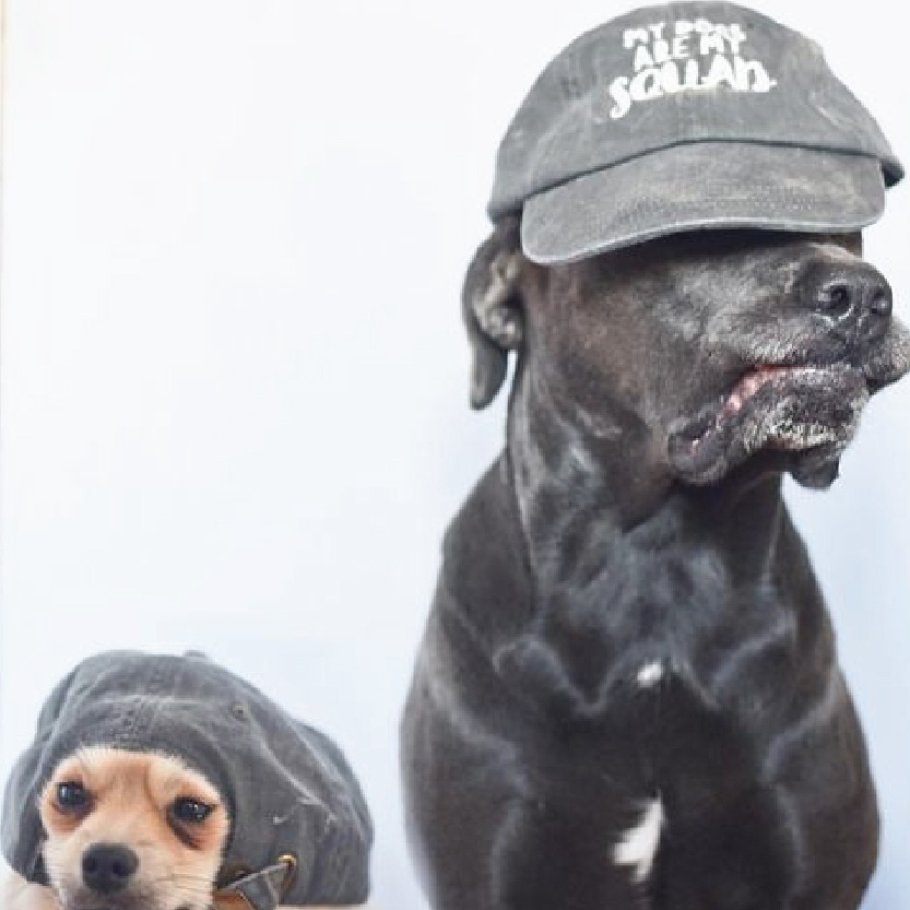 My Dogs Are My Squad Baseball Hat By Barkley & Wagz