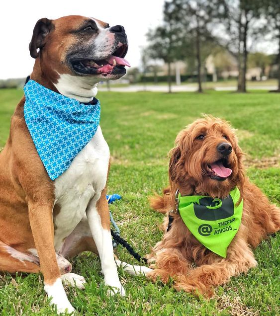 Barkley & Wagz Instagram Dog Personalized Dogstagram Bandana