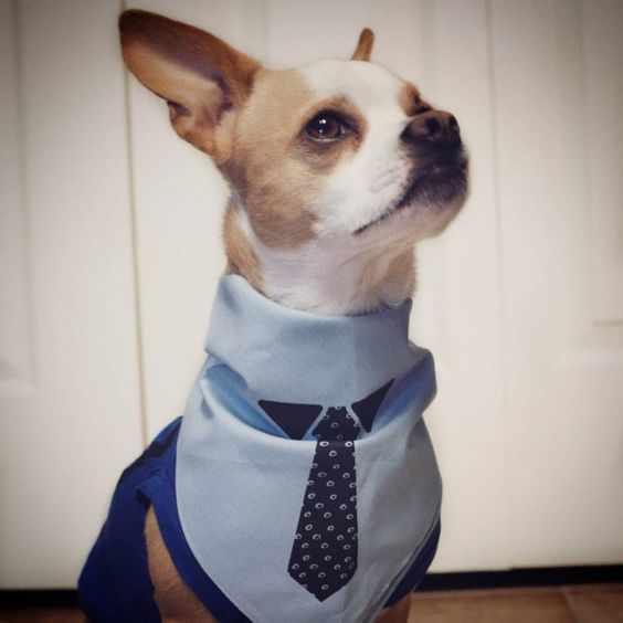 Dog Wearing Barkley & Wagz Necktie Bandana