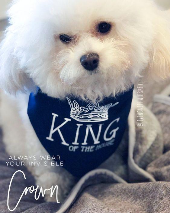 Dog Wearing Barkley & Wagz King of the House Bandana