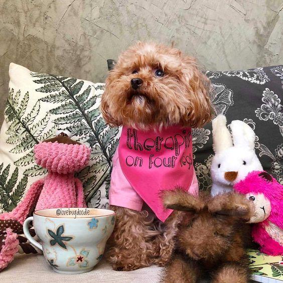 "Dog Wearing ""Therapist on Four Legs"" Barkley & Wagz Bandana"