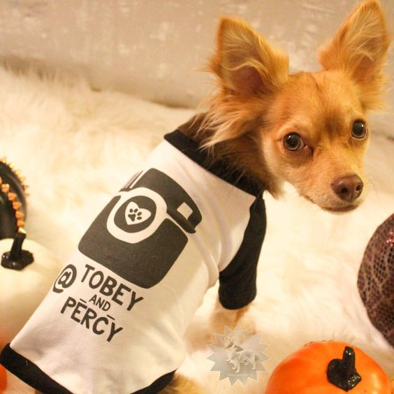 Barkley & Wagz Custom Instagram Dogstagram Dog Raglan