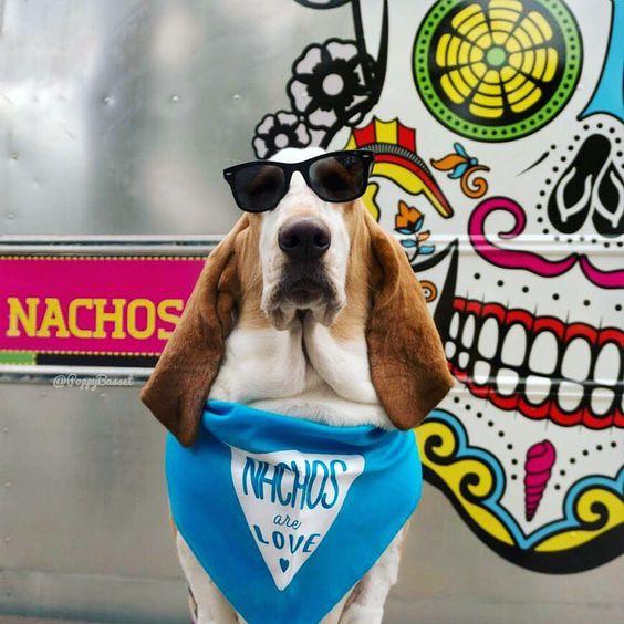 """Nachos are Love"" Bandana By Barkley & Wagz - Basset Hound"