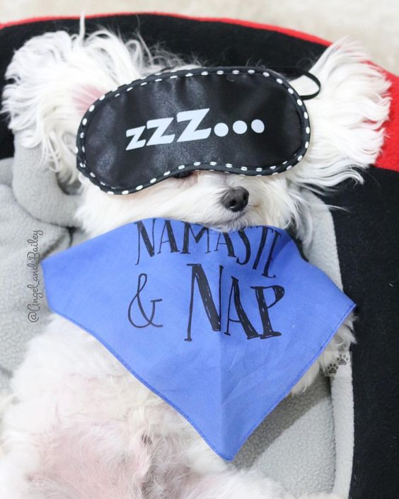 """Dog Wearing Barkley & Wagz """"Namaste & Nap"""" Bandana"""