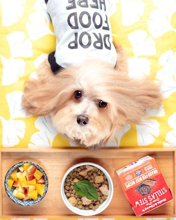 """Maltipoo Wearing Barkley & Wagz """"Drop Food Here"""" Dog Raglan"""