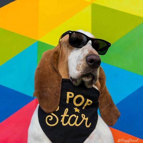 Basset Hound Wearing Customized Personalized Custom Barkley & Wagz Bandana