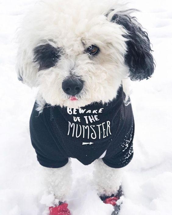 "Dog Wearing ""Beware of the Momster"" Barkley & Wagz Bandana"