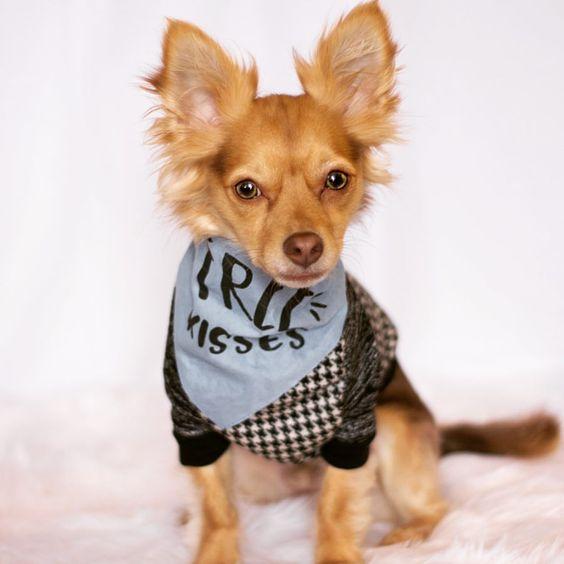 """Dog Wearing Barkley & Wagz """"Free Kisses"""" Bandana"""