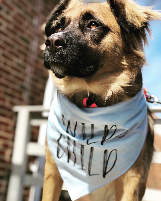 """Barkley & Wagz Customized Personalized Custom """"Wild Child"""" Leaves Bandana"""