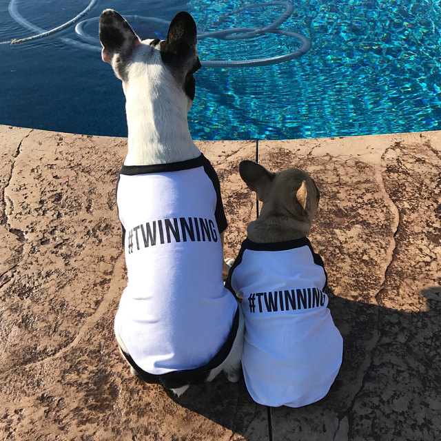 Twinning T-Shirt Set for Dogs | #Twinning Matching Tees | Brother Sister BFFs Best Friends Dogs Graphic Baseball Raglan Tee Dog Lovers