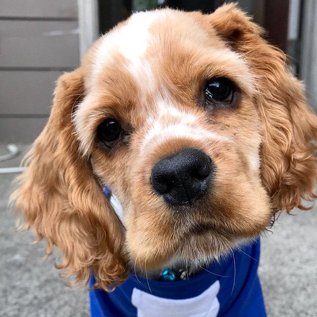 Custom Dog Name Age Team Jersey Birthday Dog Shirt | 17 Colors 10 Sizes Dog Raglan or Tank | Typography Black & White