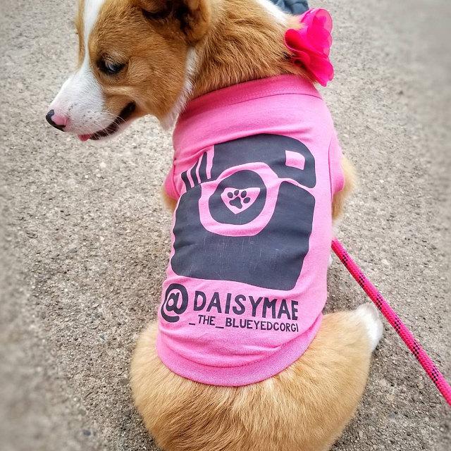 Pembroke Welsh Corgi Wearing Custom Barkley & Wagz Instagram Dogstagram Dog Hot Pink Tank