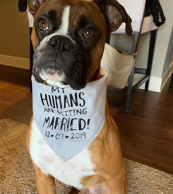 Custom My Humans are Getting Married Engagement Announcement Bandana | NEW! 19 Colors! 3 Sizes Scarf for Dogs Fun Custom Personalized Gifts
