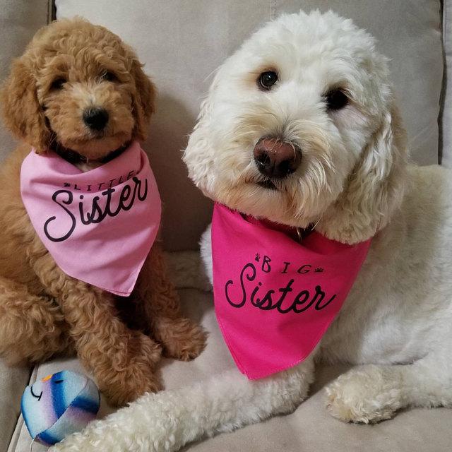Doodles Wearing Barkley & Wagz Custom Personalized Big Sister Little Sister Bandana Set