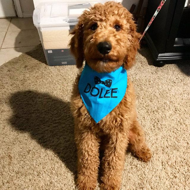 Doodle Wearing Custom Personalized Barkley & Wagz Dog Bandana