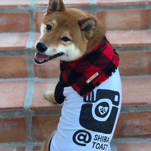 Shiba Inu Wearing Barkley & Wagz Dogstagram Instagram T-Shirt Raglan