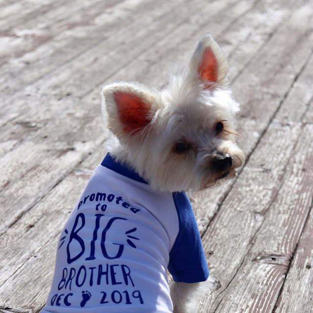 Promoted to Big Brother Big Sister Shirt | NEW COLORS! - 17 Colors 10 Sizes Dog Raglan or Tank | Typography Black & White Cute Custom Tee