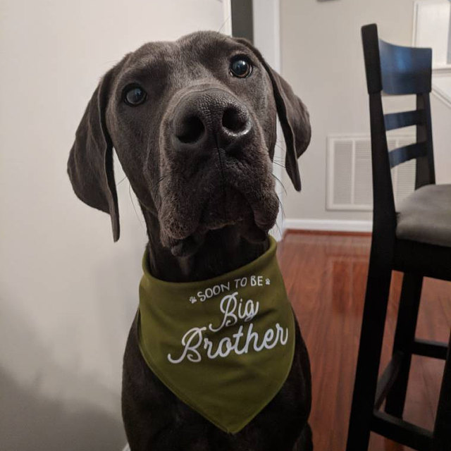 Custom Soon to Be Big Sister Little Brother Birth Announcement Dog Bandana Scarf | NEW! 19 Colors! 3 Sizes | Custom Personalized Gifts