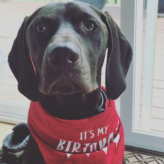 It's My Birthday Cute Dog Party Bandana | NEW! 19 Colors! 3 Sizes | Colorful Bandana for Dogs Doggies | Custom Personalized Gifts Dog Lovers