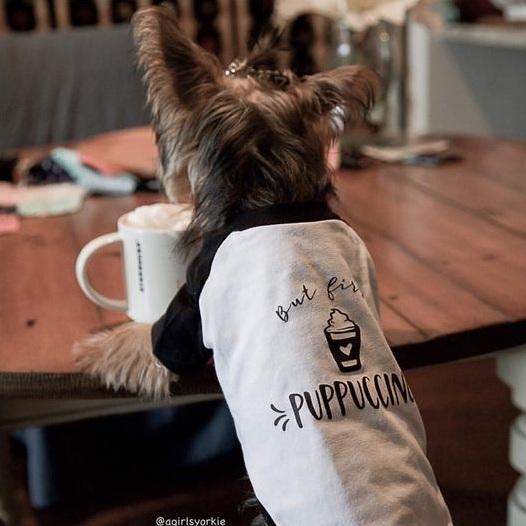 "Yorkie Wearing ""But First, Puppuccino"" Barkley & Wagz Dog Raglan T-Shirt"