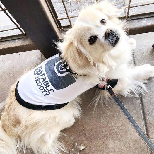 Dog Wearing Custom Barkley & Wagz Instagram Dogstagram Instadog Raglan T-Shirt for Dogs