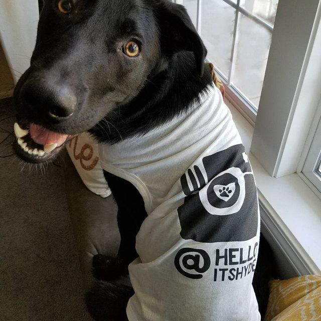 Dog Wearing Barkley & Wagz Dogstagram Instagram Dog Tank T-Shirt