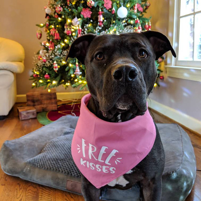 Free Kisses, Cuddles, or Snuggles Bandana | NEW! 19 Colors! 3 Sizes | Colorful Bandana for Dogs Doggies | Fun Custom Personalized Gifts