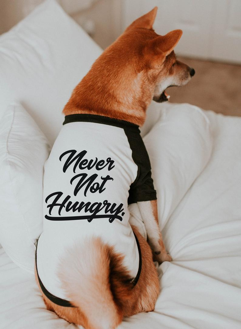 Never Not Hungry T-Shirt Raglan For Dogs By Barkley & Wagz