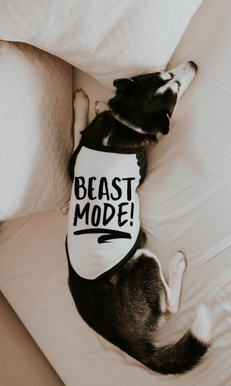 Husky Wearing Beast Mode Tee By Barkley & Wagz