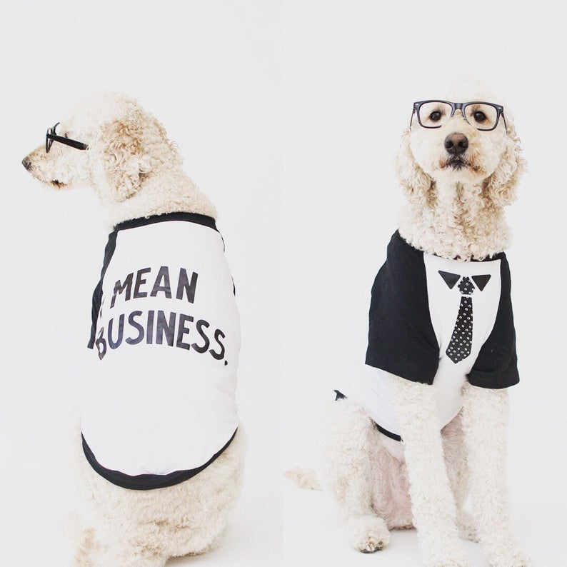 Doodle Wearing I Mean Business Necktie Raglan By Barkley & Wagz