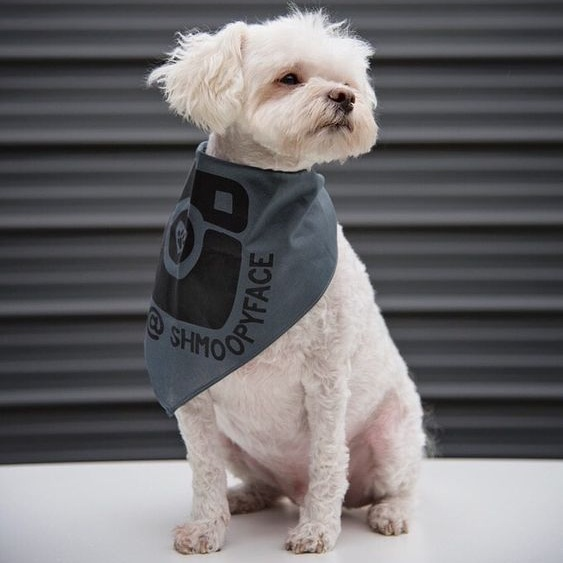 Dog Wearing Personalized Instagram Bandana By Barkley & Wagz
