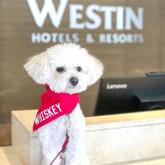 Dog Wearing Custom Barkley & Wagz Name Bandana