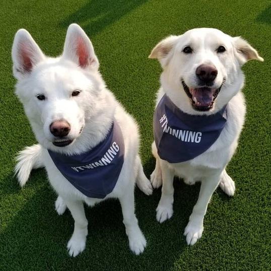 Dogs Wearing #TWINNING Bandana Set By Barkley & Wagz