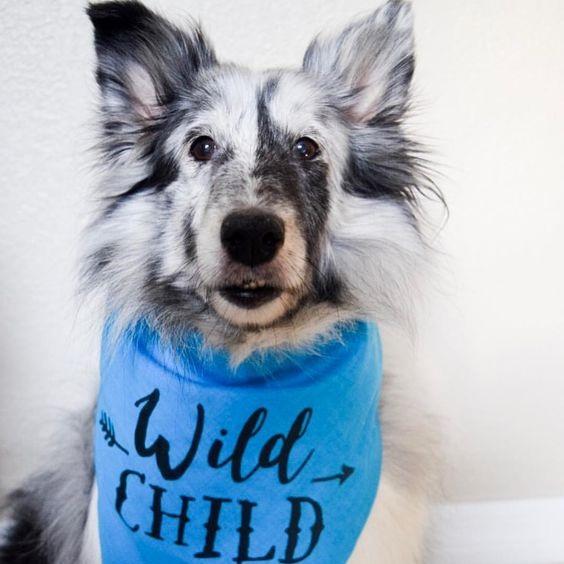 Wild Child Bandana By Barkley & Wagz