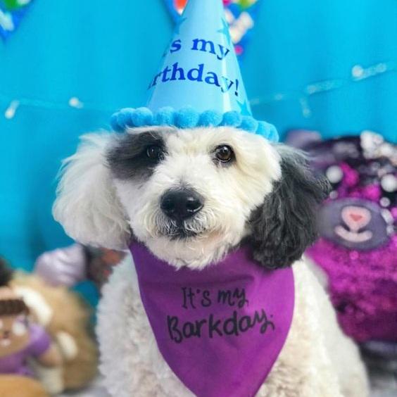 It's My Barkday Birthday Party Dog Bandana By Barkley & Wagz