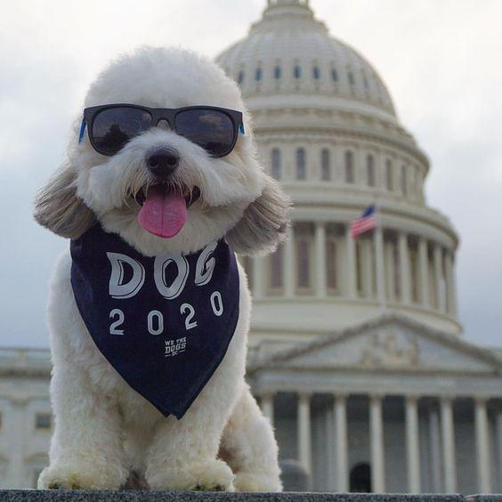 Dog Wearing DOG 2020 Bandana By Barkley & Wagz For We The Dogs DC