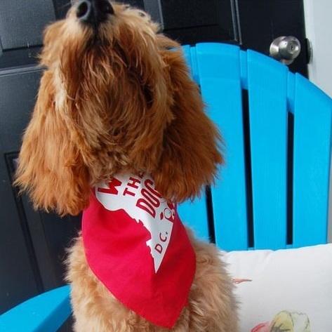 Dog Wearing We The Dogs DC Bandana By Barkley & Wagz